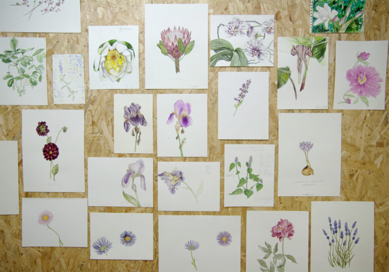 Botanical Drawing Exhibition:Prinzessinnengarten